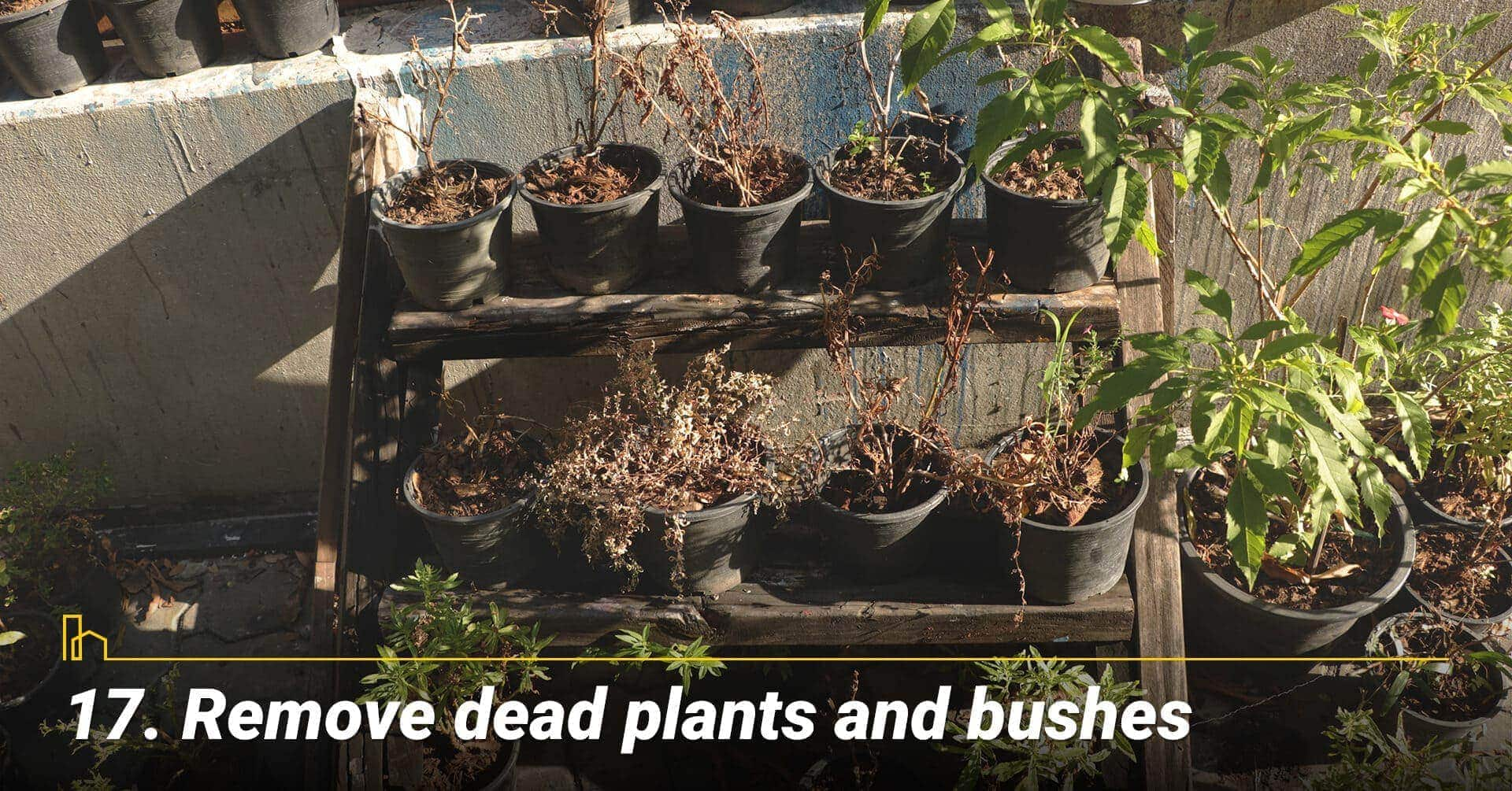 Remove dead plants and bushes, keep the backyard clean