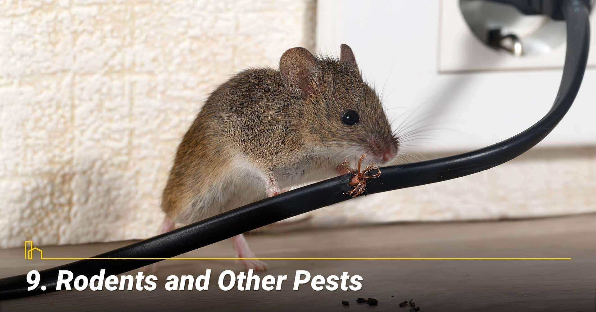Rodents and Other Pests, unwanted pests around the house